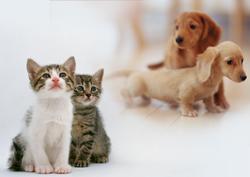 犬と猫の写真